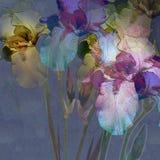 Diseño floral Fotografía de archivo libre de regalías