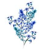 Diseño floral de la acuarela Foto de archivo