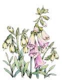 Diseño floral de la acuarela aislado en blanco Fotografía de archivo