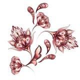 Diseño floral del adorno de la acuarela stock de ilustración