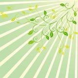 Diseño floral del desfile de la sol Fotografía de archivo libre de regalías