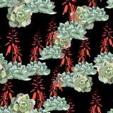 Diseño floral del estilo de la acuarela del vector inconsútil del modelo: suculento en la floración con las flores anaranjadas ilustración del vector