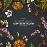 Diseño floral en fondo oscuro con el áloe, calendula, lirio de los valles, ortiga, fresa, valeriana libre illustration