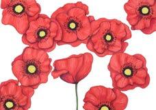 Diseño floral Handdrawn Imagenes de archivo