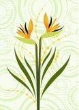 Diseño floral hermoso libre illustration