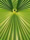 Diseño geométrico simétrico de la fronda de hoja de palma verde fotos de archivo libres de regalías