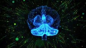 diseño gráfico de la animación 3d de cerebro humano y de tronco del encéfalo que muestran y que hacen girar con conocimiento o la ilustración del vector