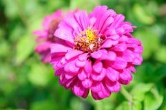 Diseño hermoso de la flor fotos de archivo libres de regalías