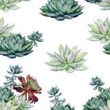 Diseño inconsútil del modelo de los succulents de la acuarela stock de ilustración