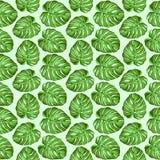 Diseño inconsútil del vector del zueco de la materia textil de las hojas tropicales de Monstera stock de ilustración