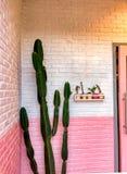 Diseño mínimo del cactus en la pared rosada fotografía de archivo libre de regalías