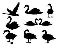 diseño majestuoso del ejemplo de la silueta del logotipo del vector del cisne del detalle ilustración del vector