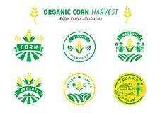 Diseño orgánico de la insignia de la cosecha de maíz Foto de archivo libre de regalías