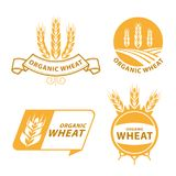 Diseño orgánico del vector de la muestra de la bandera de la comida de los productos del grano del arroz de Paddy Wheat stock de ilustración