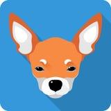 Diseño plano del icono de la chihuahua del perro Imagenes de archivo
