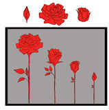 Diseño rojo de las rosas stock de ilustración