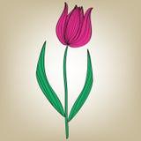 Diseño rosado del modelo de la tarjeta del tulipán Foto de archivo libre de regalías