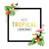 Diseño tropical Fotografía de archivo libre de regalías