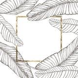 Diseño tropical del vector de las hojas del verano Fondo floral abstracto Invitación o diseño de tarjeta con las hojas de la selv Fotos de archivo libres de regalías