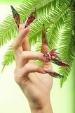 Diseño tropical en clavos Foto de archivo libre de regalías