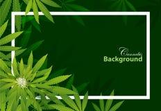 Diseño verde de la opinión superior de las hojas de té en fondo fotografía de archivo libre de regalías