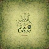 Diseño verde oliva de las etiquetas Foto de archivo libre de regalías