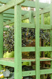 Diseños de la esquina minúsculos del flor del jardín y de instalaciones Imagenes de archivo