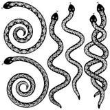Diseños de la serpiente Fotos de archivo libres de regalías