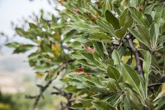 Disease of fruit trees Stock Images