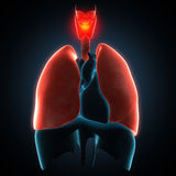 Disease illustration of human lungs. Royalty Free Stock Images