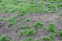 Diseased lawns Stock Image