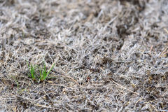 Diseased lawns Stock Images