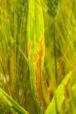 diseased leaf arkivfoto