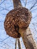 Diseased Tree Stock Images
