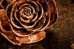 Disecada de Rosa imagen de archivo libre de regalías
