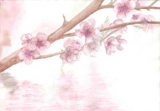 Disegnando con il ` del ramo di Sakura del ` dell'acquerello Illustrazione di Stock