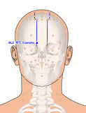 Disegnando con lo scheletro, punto BL2 Cuanzhu, 3D Illustr di agopuntura Fotografia Stock
