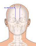 Disegnando con lo scheletro, punto BL4 Qucha, 3D Illustrat di agopuntura Fotografia Stock Libera da Diritti