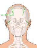 Disegnando con lo scheletro, punto GB14 Yangbai, 3D Illust di agopuntura Fotografie Stock