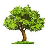 Disegnato a mano dell'illustrazione di vettore dell'albero dipinto Fotografia Stock Libera da Diritti