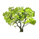 Disegnato a mano dell'illustrazione di vettore dell'albero dipinto Fotografia Stock