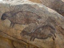 Disegni della roccia dell'istrice fotografia stock