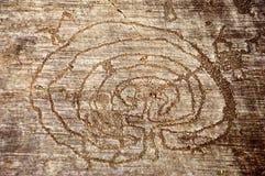 Disegni della roccia in Valcamonica - labirinto Fotografie Stock Libere da Diritti
