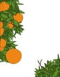 Disegno arancione della pagina Fotografia Stock Libera da Diritti