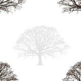Disegno astratto della quercia Fotografia Stock