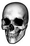 Disegno d'annata di stile del cranio royalty illustrazione gratis