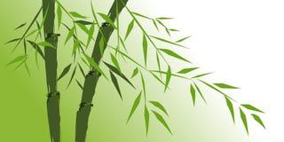 Disegno degli alberi di bambù cinesi Immagini Stock