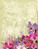 Disegno dei fiori della sorgente Immagini Stock