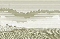 Disegno del campo dell'azienda agricola Fotografia Stock