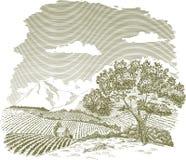 Disegno del campo dell'azienda agricola della montagna Fotografia Stock Libera da Diritti
